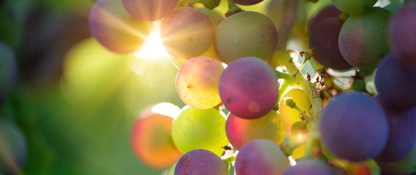melhores vinhos para comprar no Chile (1)